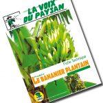 Produire le Bananier plantain