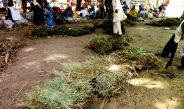 Cameroun : Le commerce du fourrage