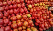 Cameroun : Marché de la tomate, Maroua l'autosuffisante