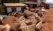 Cameroun : La filière poulet agonise de nouveau
