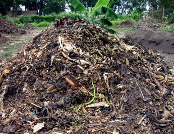 Cameroun : Comment fabriquer son compost