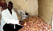 Cameroun : L'Extrême-Nord se concentre sur le sorgho et les oignons