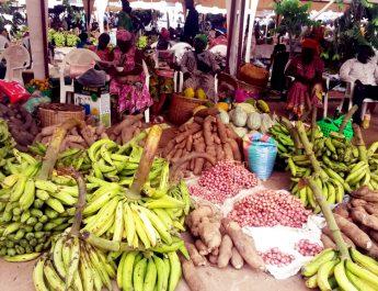 Cameroun : Financer, protéger et promouvoir la production locale