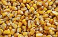 Cameroun : Des semences en fonction du  calendrier agricole