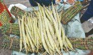 Cameroun : Manioc et bâtons  cherchent preneur dans la Lékié