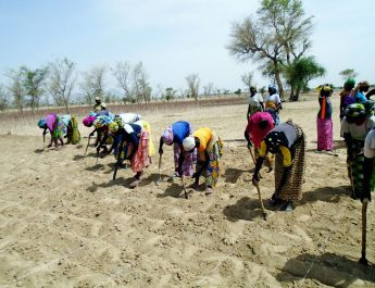 Campagne agricole 2018 : Les agriculteurs du septentrion prennent le départ