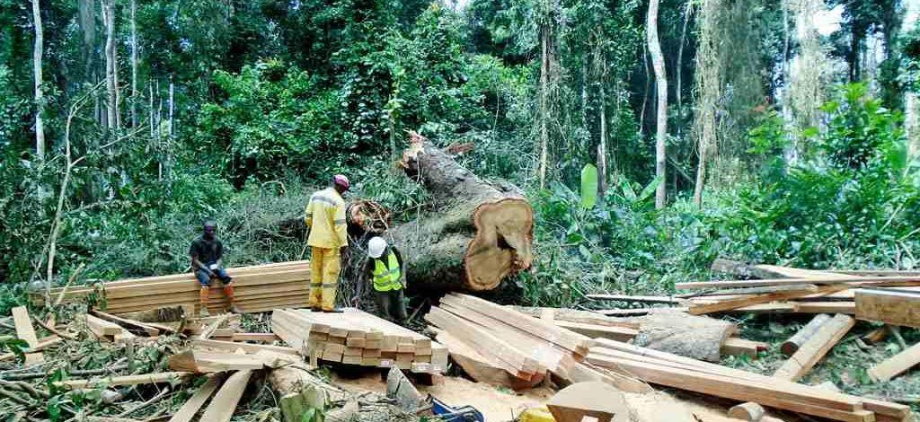 Cameroun : La fiscalité sur le bois telle que prescrite par la loi