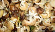 Cameroun : Le commerce des escargots rapporte