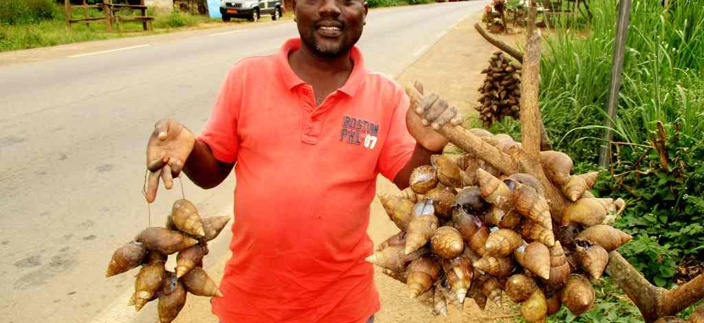 Cameroun : Christian Zoa, un ramasseur professionnel d'escargots
