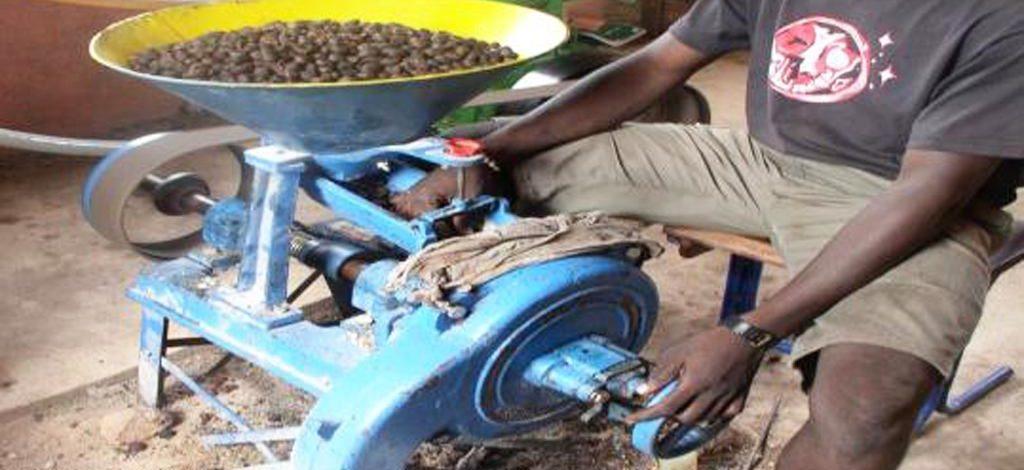 Cameroun : Méthode d'extraction améliorée du beurre de karité