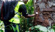 Cameroun : Les forêts communautaires passent au numérique