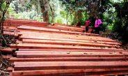 Cameroun : La taxe d'abattage du bois passe de 2,5% à 4% en 2019