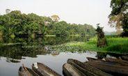 Cameroun : Mort mystérieuse de poissons dans la rivière Ndjéké