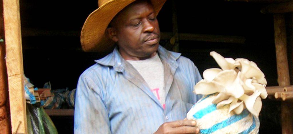 Cameroun : La production du champignon est une activité génératrice de bénéfices
