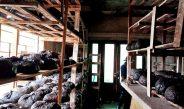 Cameroun : Comment préparer une champignonnière