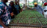Cameroun : Immersion à Songhaï Porto-Novo, une ferme agroécologique de renom
