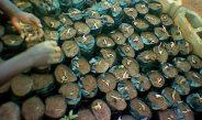 Cameroun : Voici comment créer sa pépinière de palmier à huile