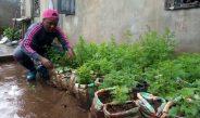 Cameroun : Nathalie Ladem, symbole d'un amour ardent pour l'artemisia