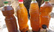 Cameroun : L'huile de neem lutte contre les insectes ravageurs (bruches) de  légumineuses