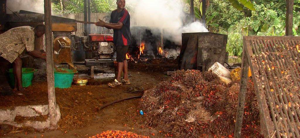 Cameroun : Que faire pour obtenir une huile de palme de bonne qualité ?