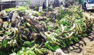 COVID-19 : Comment parer à une crise alimentaire ?