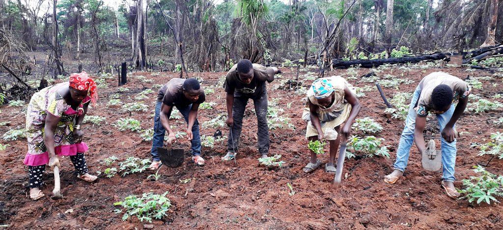Cameroun : Il faut une intervention adaptée en milieu rural contre le Covid-19