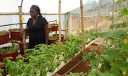 Cameroun : Bienvenue dans l'hydroponie à Yaoundé