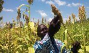 Cameroun : Où trouver les semences agricoles en 2020