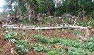 Cameroun : «Il ne faut surtout pas ouvrir la forêt d'Ebo»