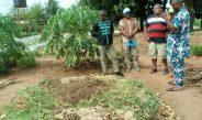 Cameroun : Formation agricole, l'agroécologie fait son entrée à l'école
