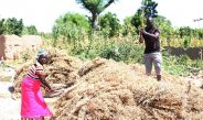 Cameroun : Les pertes post-récoltes agricoles préoccupent à l'Extrême-Nord