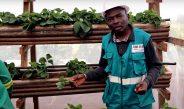 Cameroun : «La culture de la fraise sous serre est très avantageuse»