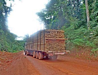 Cameroun : Des villages compressés par l'exploitation forestière à Bétaré Oya