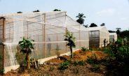 Cameroun : Origines Farm, Une ferme spécialisée dans la culture sous serre