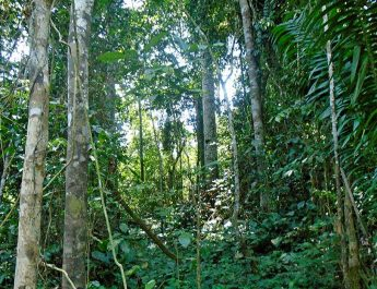 Cameroun : La forêt d'Ebo est menacée, protégeons là