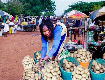 Cameroun : Bien conserver ses pommes de terre pour les vendre au bon moment
