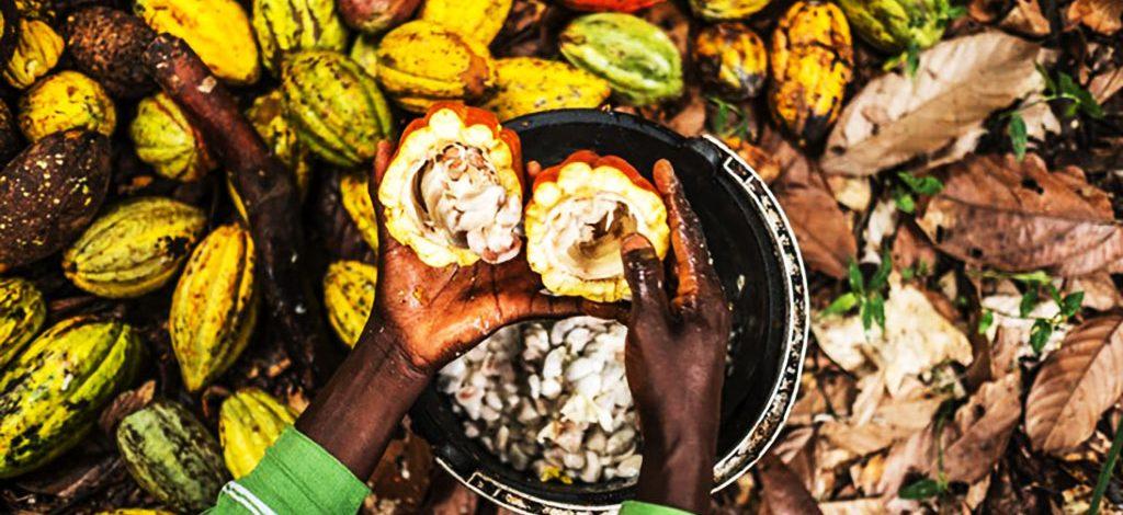 Cameroun : Les coopératives agricoles à l'école du business