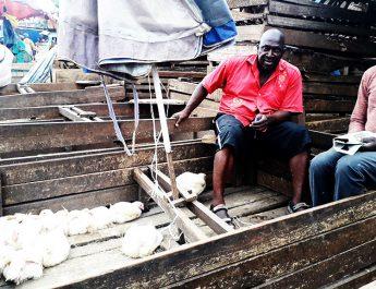 Cameroun : De plus en plus rare, le poulet de chair se vend aux enchères