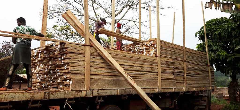 Cameroun : Du bois légal sur le marché local