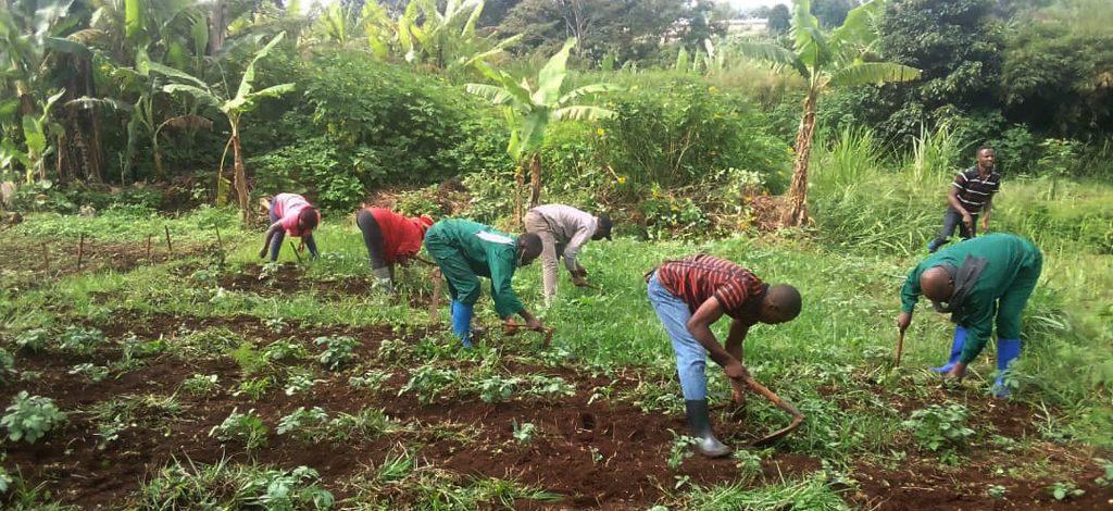 Le Cameroun évalue ses filières de formation professionnelle agricole