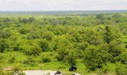 Cameroun : Qu'est-ce qu'une forêt communautaire ?